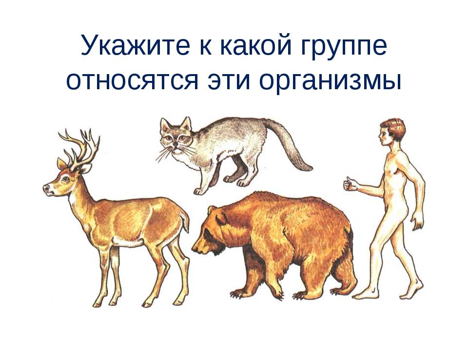 Укажите к какой группе относятся эти организмы