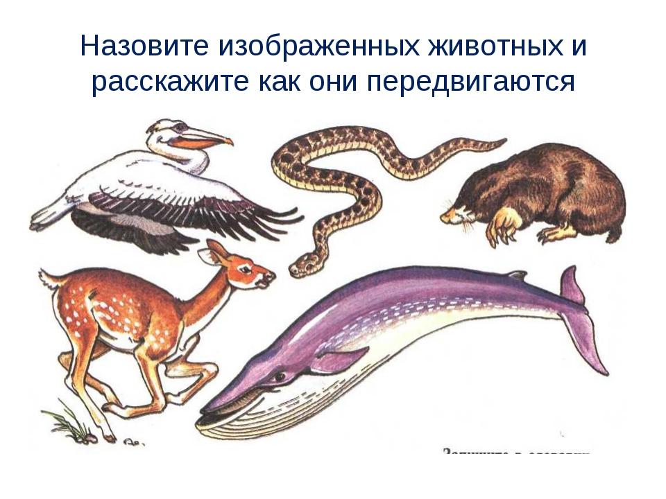 Назовите изображенных животных и расскажите как они передвигаются