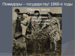 Помидоры – государству! 1960-е годы