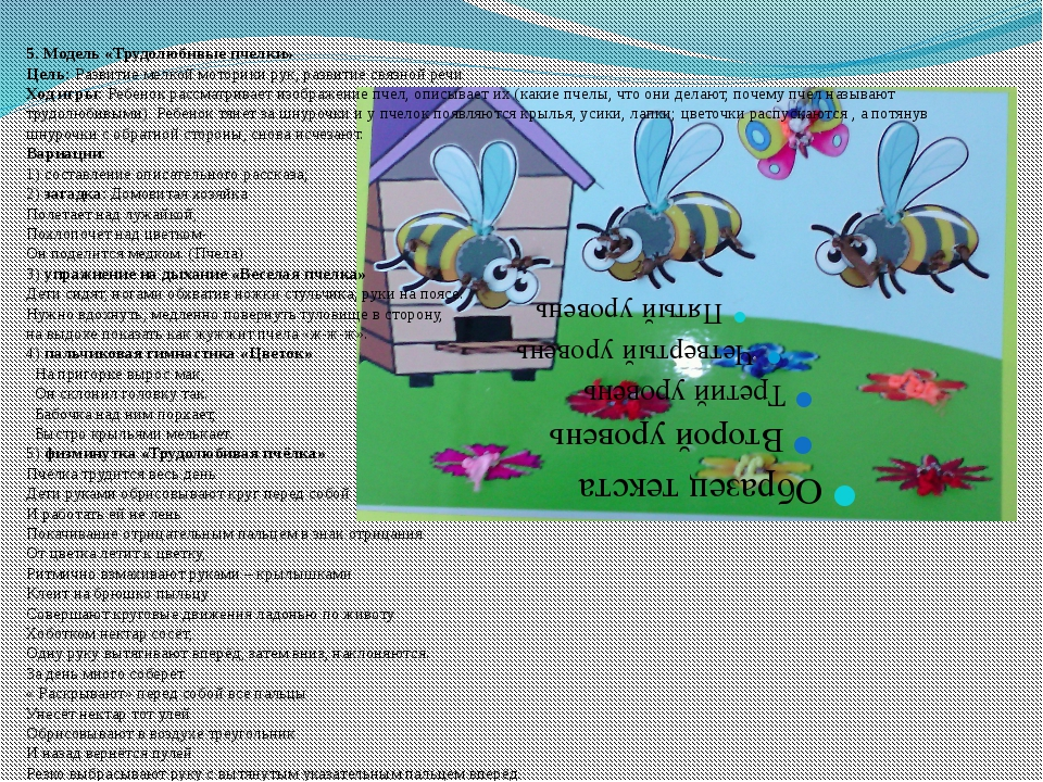 5. Модель «Трудолюбивые пчелки» Цель: Развитие мелкой моторики рук, развитие...