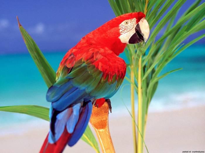 Картинки попугаев ара