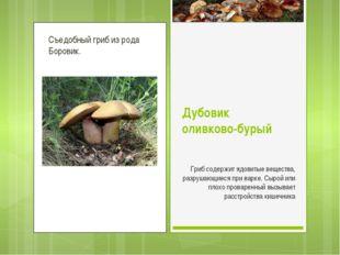 Съедобный гриб из рода Боровик. Дубовик оливково-бурый Гриб содержит ядовитые