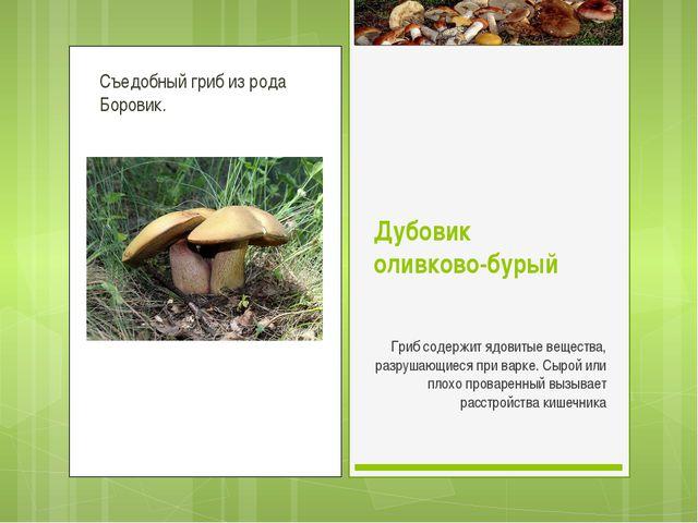 Съедобный гриб из рода Боровик. Дубовик оливково-бурый Гриб содержит ядовитые...
