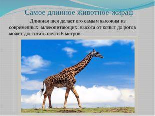 Самое длинное животное-жираф Длинная шея делает его самым высоким из совреме