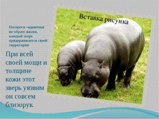 Носороги –одиночки по образу жизни, каждый зверь придерживается своей террито