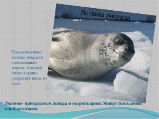 Тюлени- прекрасные ловцы и ныряльщики. Живут большими сообществами. Новорожде