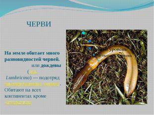 ЧЕРВИ На земле обитает много разновидностей червей. Земляны́еилидождевы́е