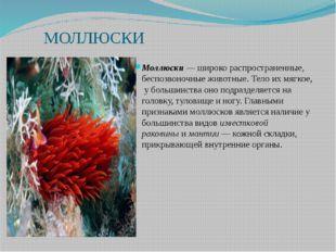 МОЛЛЮСКИ Моллюски— широко распространенные, беспозвоночные животные. Тело и