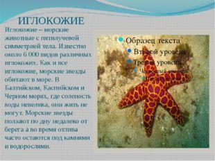 ИГЛОКОЖИЕ Иглокожие – морские животные с пятилучевой симметрией тела. Извест