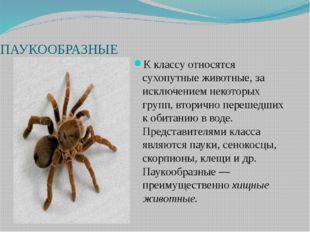 ПАУКООБРАЗНЫЕ К классу относятся сухопутные животные, за исключением некотор