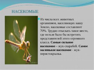 НАСЕКОМЫЕ Из числа всех животных организмов, населяющих нашу Землю, насекомы