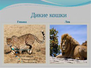 Дикие кошки Гепард Лев