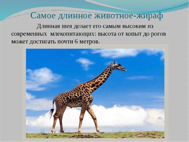 Самое длинное животное-жираф Длинная шея делает его самым высоким из совреме...