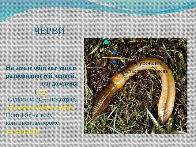 ЧЕРВИ На земле обитает много разновидностей червей. Земляны́еилидождевы́е...