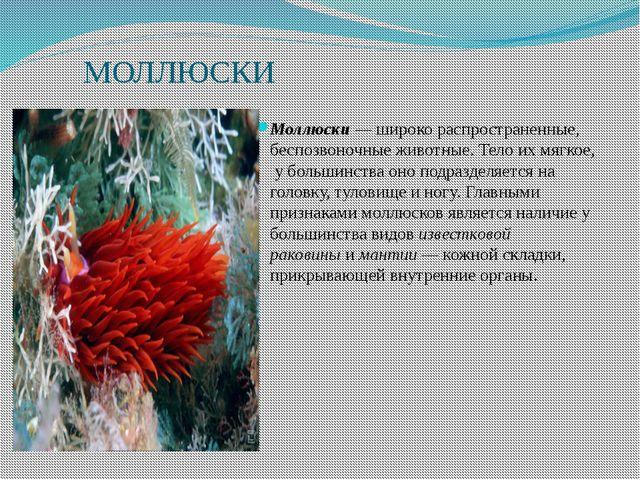 МОЛЛЮСКИ Моллюски— широко распространенные, беспозвоночные животные. Тело и...