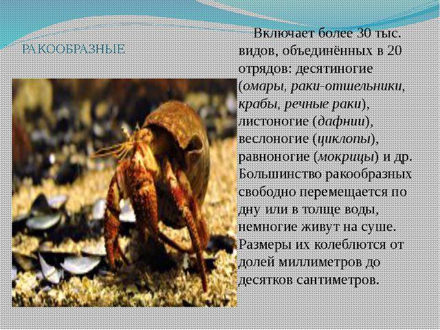 РАКООБРАЗНЫЕ Включает более 30 тыс. видов, объединённых в 20 отрядов: десяти...