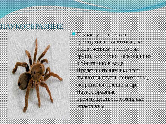 ПАУКООБРАЗНЫЕ К классу относятся сухопутные животные, за исключением некотор...