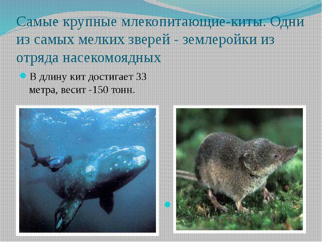 Самые крупные млекопитающие-киты. Одни из самых мелких зверей - землеройки из...