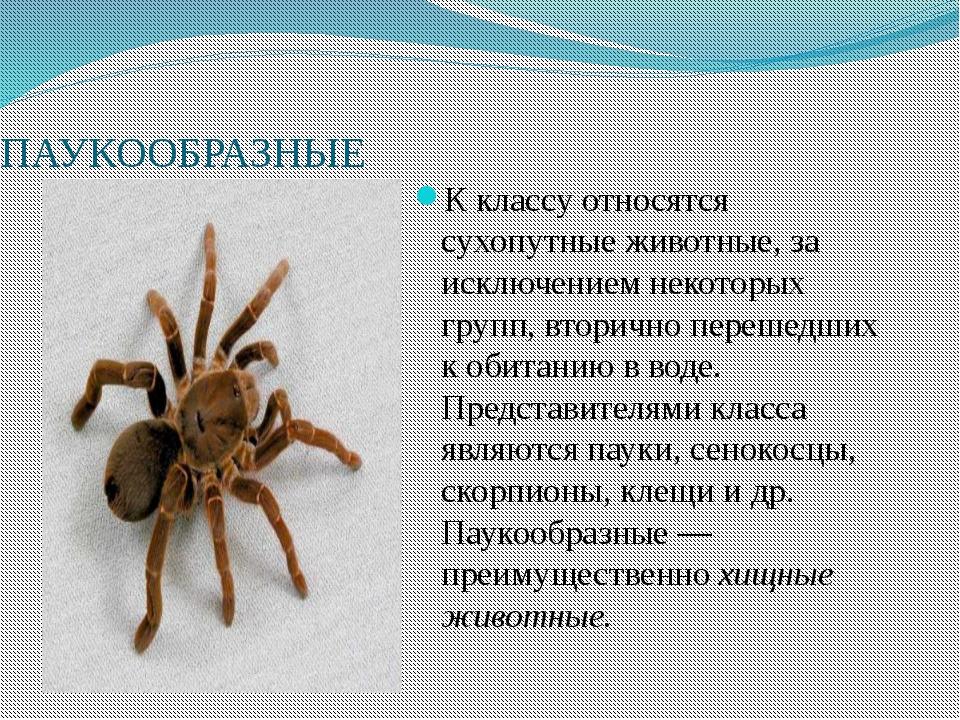 Картинки к докладу по паук
