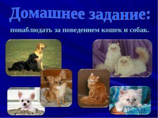понаблюдать за поведением кошек и собак.