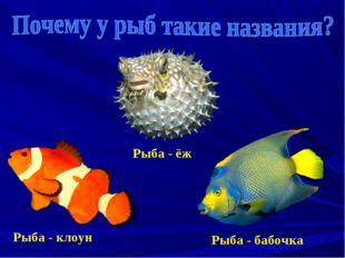 Рыба - клоун Рыба - ёж Рыба - бабочка