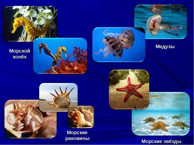 Морской конёк Медузы Морские звёзды Морские раковины