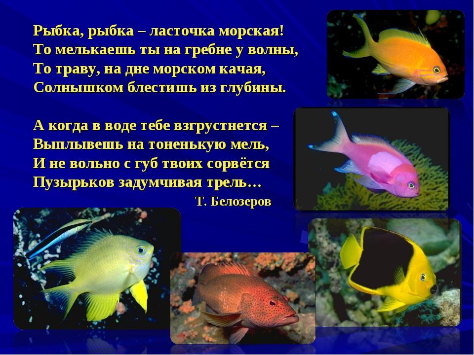 Рыбка, рыбка – ласточка морская! То мелькаешь ты на гребне у волны, То траву,...