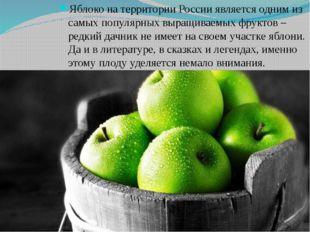 Яблоко на территории России является одним из самых популярных выращиваемых