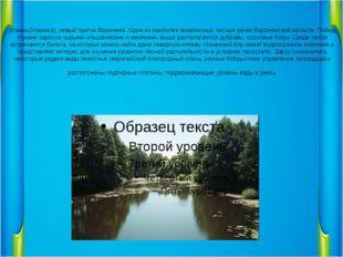 Усмань(Усманка), левый приток Воронежа. Одна из наиболее живописных лесных ре
