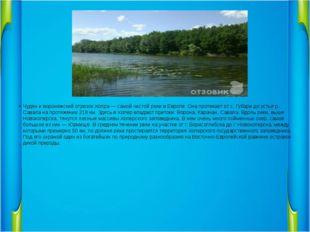 Чуден и воронежский отрезок Хопра — самой чистой реки в Европе. Она протекае