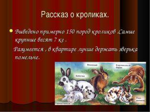 Рассказ о кроликах. Выведено примерно 150 пород кроликов .Самые крупные весят
