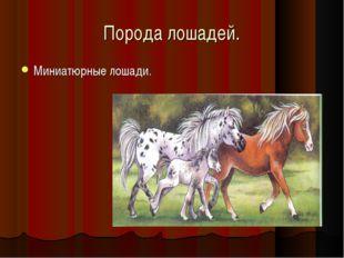 Порода лошадей. Миниатюрные лошади.