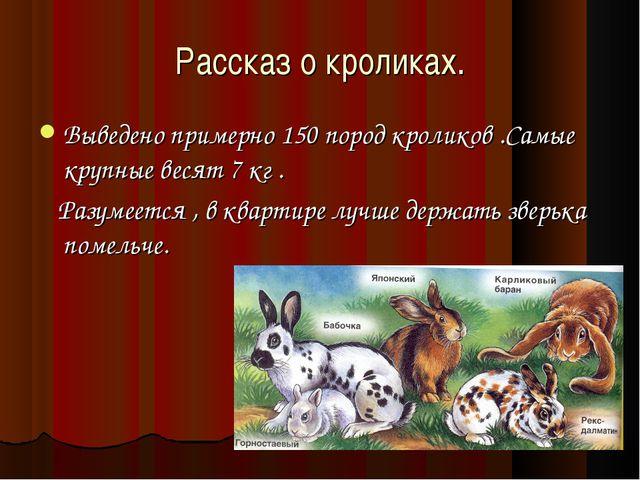 Рассказ о кроликах. Выведено примерно 150 пород кроликов .Самые крупные весят...