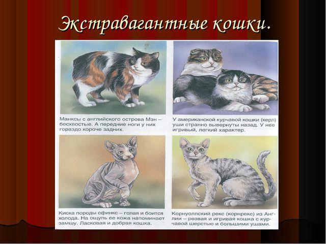 Экстравагантные кошки.