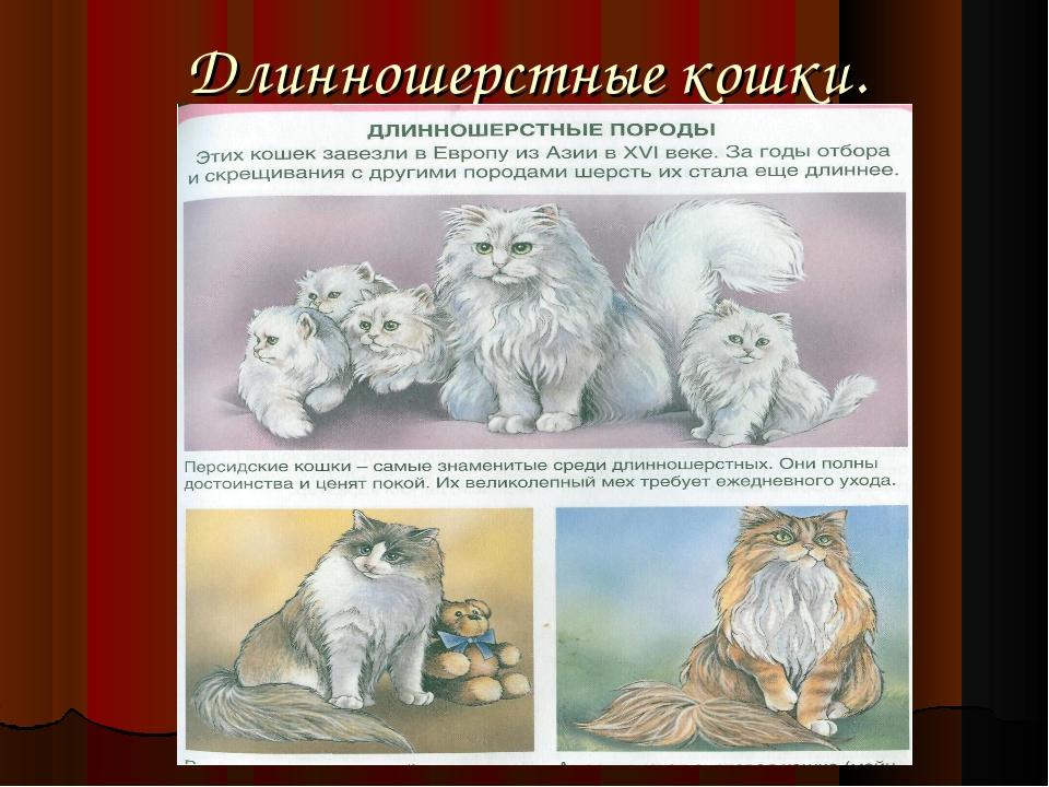 Длинношерстные кошки.