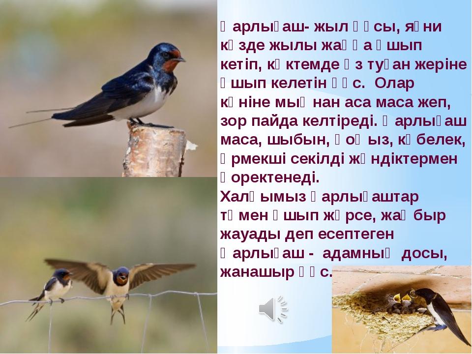 Қарлығаш- жыл құсы, яғни күзде жылы жаққа ұшып кетіп, көктемде өз туған жерін...