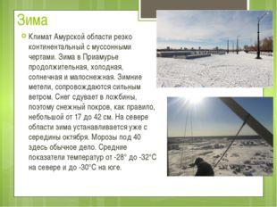 Зима Климат Амурской области резко континентальный с муссонными чертами. Зима