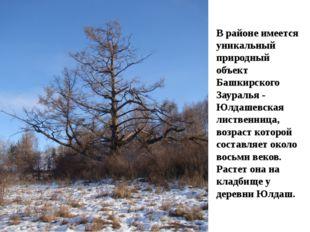 В районе имеется уникальный природный объект Башкирского Зауралья - Юлдашевс