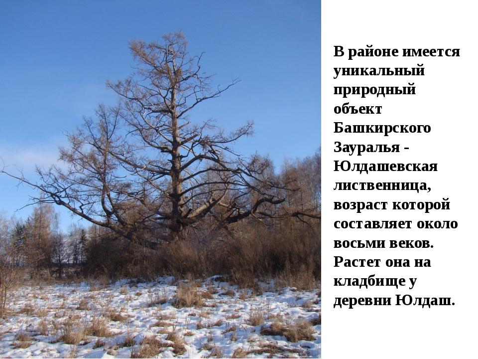 В районе имеется уникальный природный объект Башкирского Зауралья - Юлдашевс...