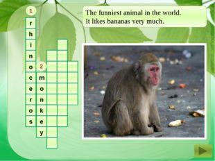 r h i n o c e r o s m o n k e y 1 2 The funniest animal in the world. It lik