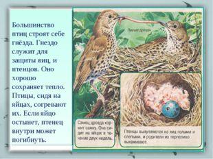 Большинство птиц строят себе гнёзда. Гнездо служит для защиты яиц, и птенцов