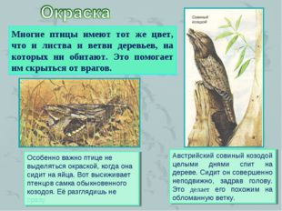 Многие птицы имеют тот же цвет, что и листва и ветви деревьев, на которых ни