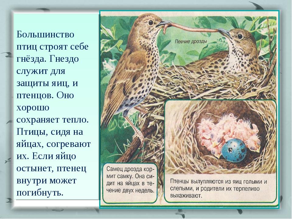 Большинство птиц строят себе гнёзда. Гнездо служит для защиты яиц, и птенцов...