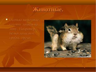 Животные. Осенью животные готовят запасы на зиму. Например, белки запасают гр