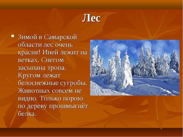 Лес Зимой в Самарской области лес очень красив! Иней лежит на ветках. Снегом...
