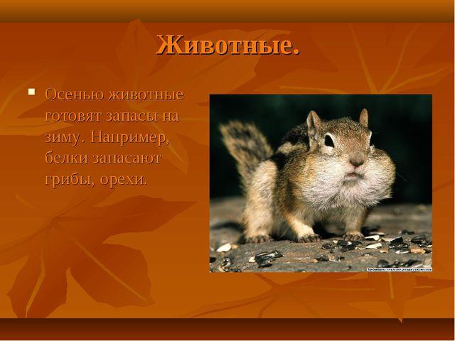Животные. Осенью животные готовят запасы на зиму. Например, белки запасают гр...