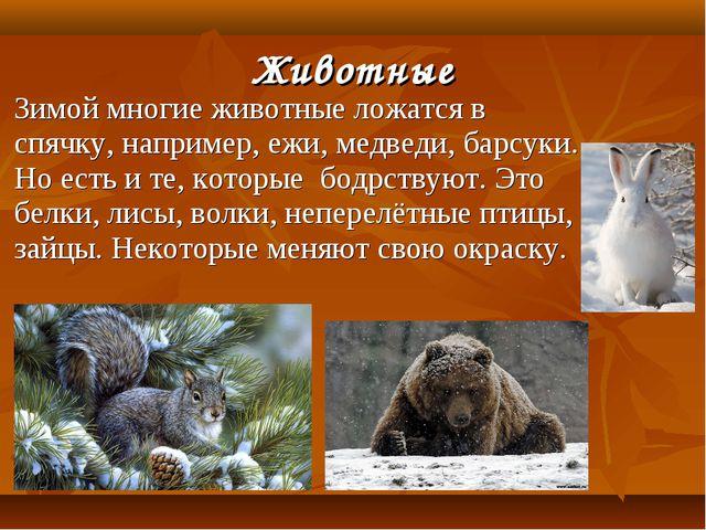 Животные Зимой многие животные ложатся в спячку, например, ежи, медведи, барс...