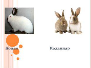 Кодан Коданнар