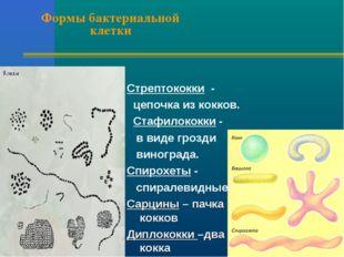 Формы бактериальной клетки Стрептококки - цепочка из кокков. Стафилококки - в