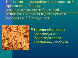 Бактерии – древнейшие из известных организмов. Следы жизнедеятельности бактер